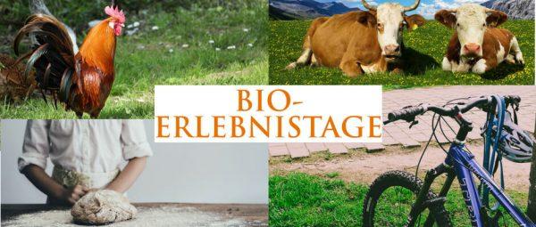 Bildkomposition aus Hahn auf Wiese, Zwei liegende Kühe auf Weide, Brot und Mountainbike.