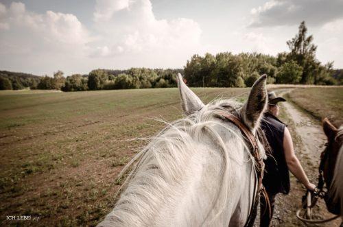 Mein Blick über den Pferdekopf hinweg in die Landschaft.