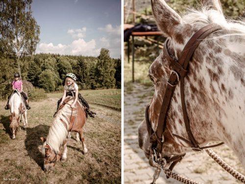 Die Rentner sind froh über das frische Gras auf der Wiese. Mein Ausblick: Ein gemütlicher Pferdekopf.