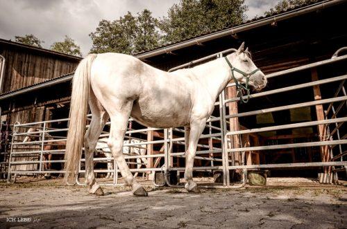 Von unten betrachtet sind Pferde noch imposanter.