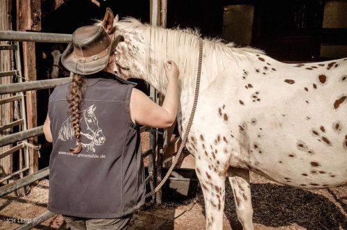 Souverän bereitet Andrea Steinkohl die Pferde für den Ausritt vor.