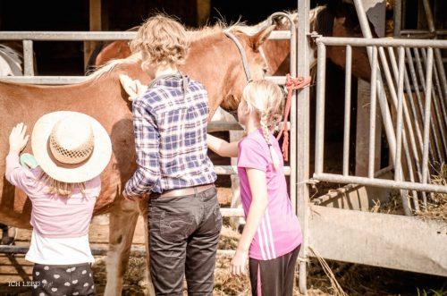 Die Mädels durften gleich mal die Pferde putzen, bevor ihnen die Sättel aufgelegt wurden.