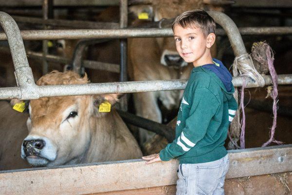 Junge steht vor einer Kuh im Stall