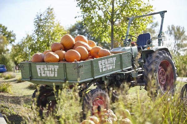 Traktoranhänger gefüllt mit Kürbissen